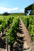 Bordeaux Day 1 Medoc and St Julian (127 of 416)